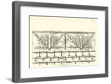 Antique Diagram for Espaliers II--Framed Art Print