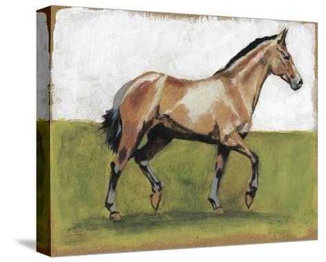 Equestrian Studies III-Naomi McCavitt-Stretched Canvas Print