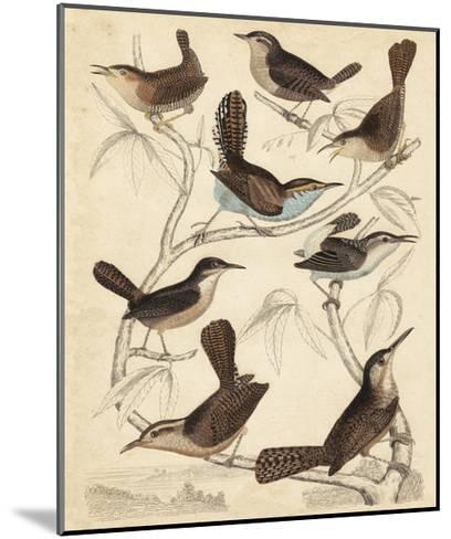 Avian Habitat VI-Milne-Mounted Art Print