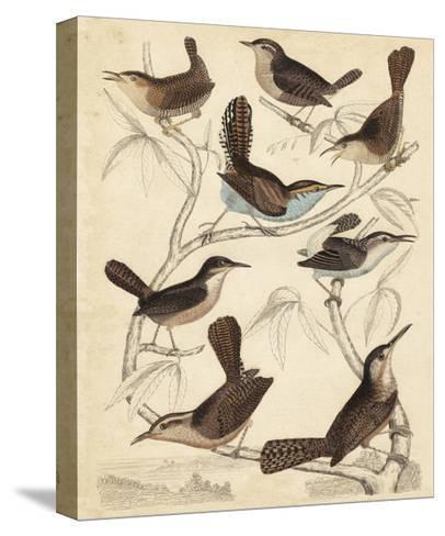 Avian Habitat VI-Milne-Stretched Canvas Print