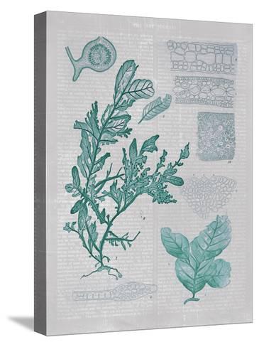 Teal Coral II-Jennifer Goldberger-Stretched Canvas Print