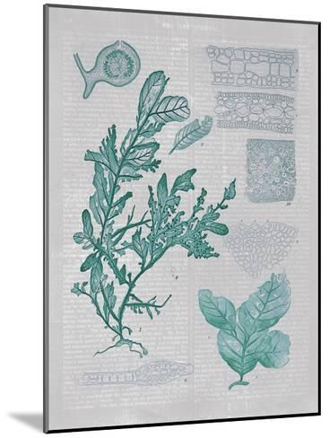 Teal Coral II-Jennifer Goldberger-Mounted Art Print