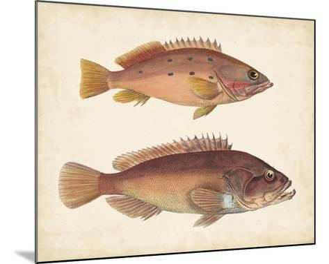 Antique Fish Species I--Mounted Art Print