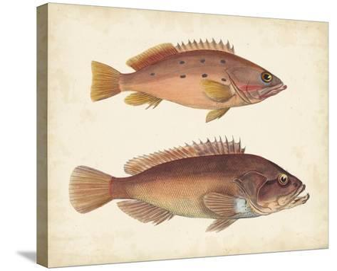 Antique Fish Species I--Stretched Canvas Print