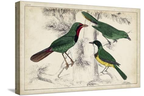 Tropical Bird Trio I--Stretched Canvas Print