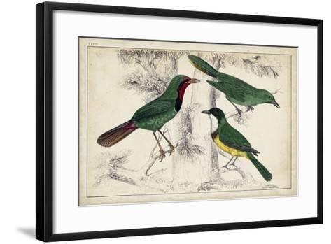 Tropical Bird Trio I--Framed Art Print