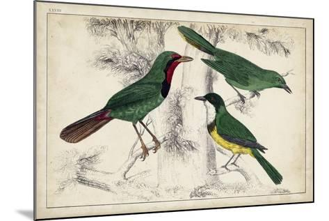 Tropical Bird Trio I--Mounted Art Print