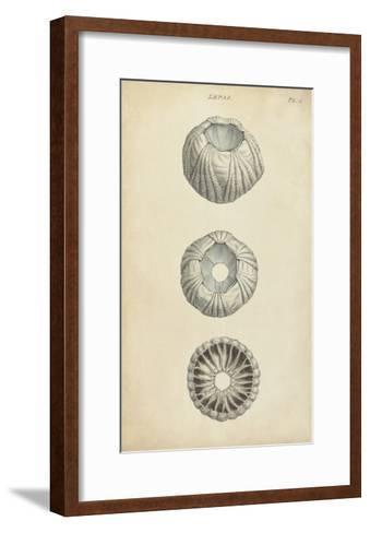 Cylindrical Shells I-Wood-Framed Art Print