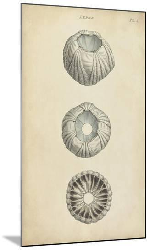Cylindrical Shells I-Wood-Mounted Art Print