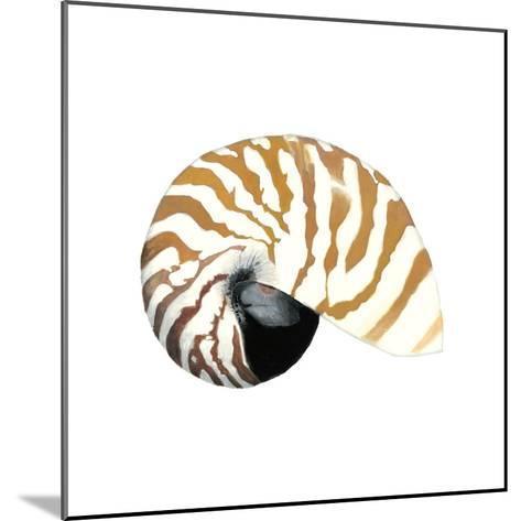 Seashore Souvenirs III-Naomi McCavitt-Mounted Art Print