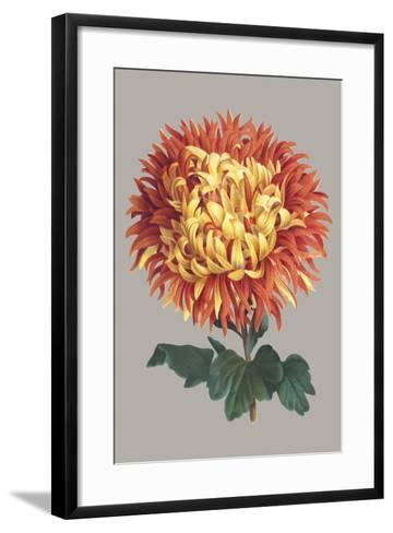 Chrysanthemum on Gray I-Vision Studio-Framed Art Print