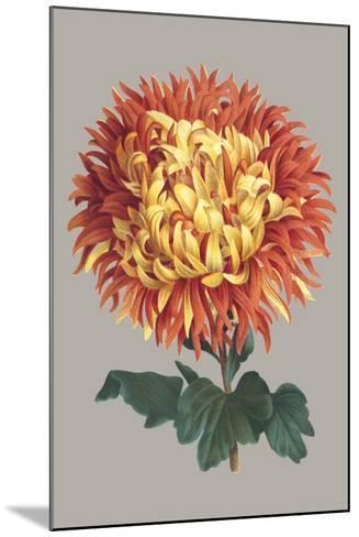 Chrysanthemum on Gray I-Vision Studio-Mounted Art Print