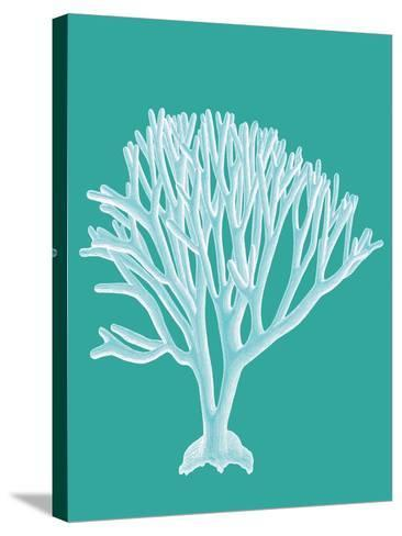Coral 2 White on Turquoise-Fab Funky-Stretched Canvas Print