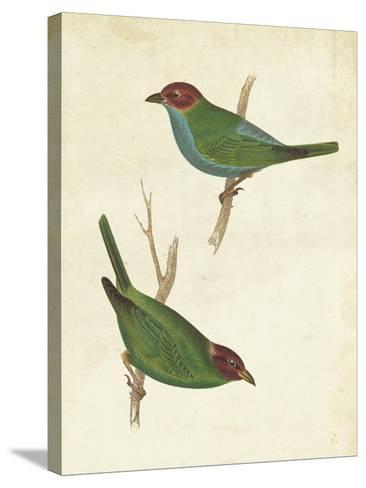 Peruvian Tanager II-Cassin-Stretched Canvas Print