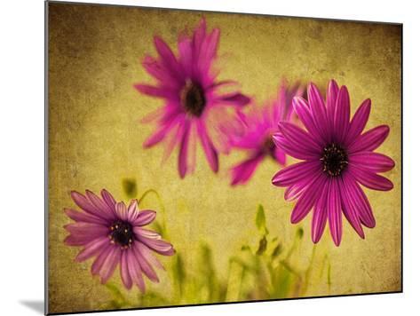 Fuchsia Daisy II-Honey Malek-Mounted Photographic Print