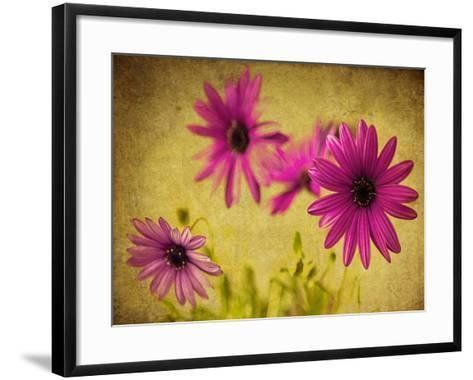 Fuchsia Daisy II-Honey Malek-Framed Art Print