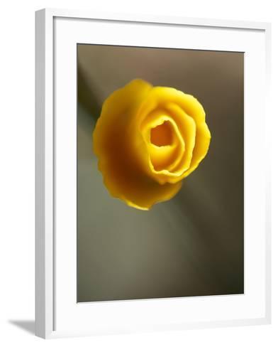 California Poppy II-Jonathan Nourock-Framed Art Print