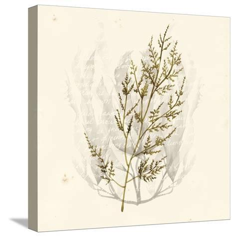 Vivid Algae I-Grace Popp-Stretched Canvas Print