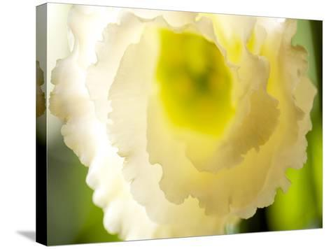 White Lisianthus I-Jonathan Nourock-Stretched Canvas Print