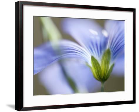 Blue Flax I-Jonathan Nourock-Framed Art Print