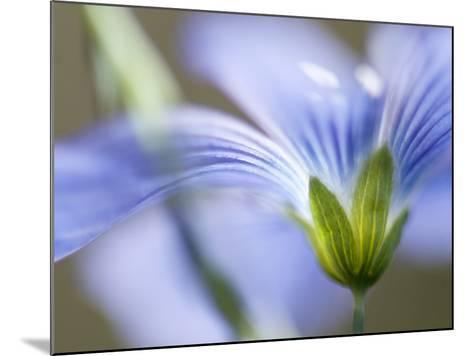 Blue Flax I-Jonathan Nourock-Mounted Photographic Print