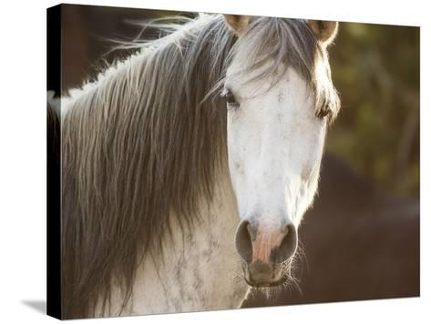 Horse in the Field IV-Ozana Sturgeon-Stretched Canvas Print