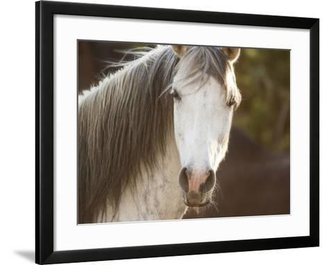 Horse in the Field IV-Ozana Sturgeon-Framed Art Print