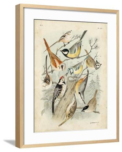 Gathering of Birds II-G^ Lubbert-Framed Art Print