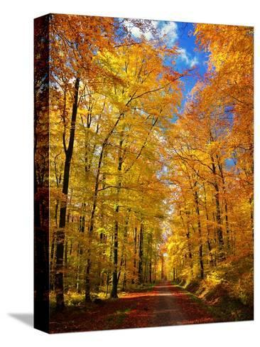 Way to Fall-Philippe Sainte-Laudy-Stretched Canvas Print