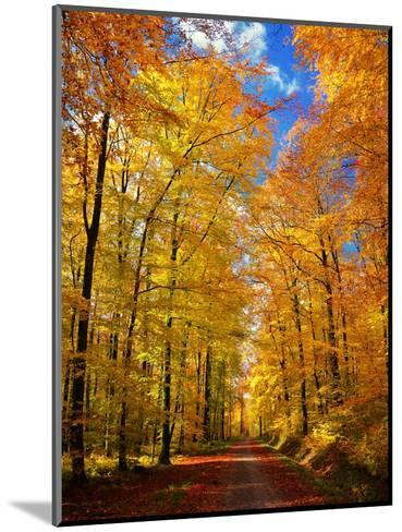 Way to Fall-Philippe Sainte-Laudy-Mounted Photographic Print