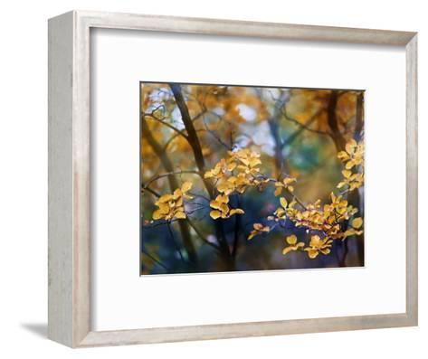 Autumn Leaves-Ursula Abresch-Framed Art Print