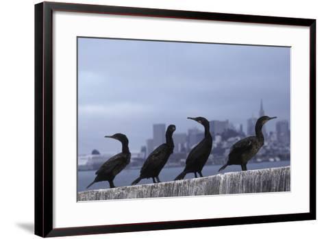 Brandt's Cormorant (Phalacrocorax Penicillatus) with the City of San Francisco in Background-Suzi Eszterhas-Framed Art Print