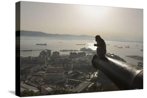 Barbary Macaque (Macaca Sylvanus) Resting on Old Canon at Sunrise-Mark Macewen-Stretched Canvas Print