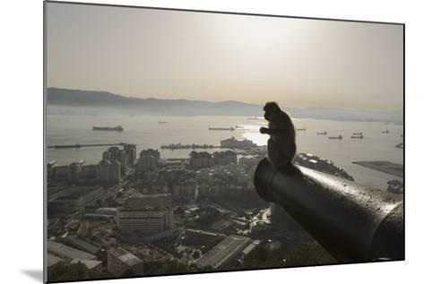 Barbary Macaque (Macaca Sylvanus) Resting on Old Canon at Sunrise-Mark Macewen-Mounted Photographic Print