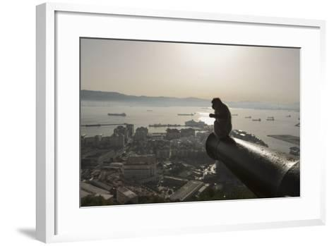 Barbary Macaque (Macaca Sylvanus) Resting on Old Canon at Sunrise-Mark Macewen-Framed Art Print