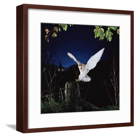 Barn Owl--Framed Art Print