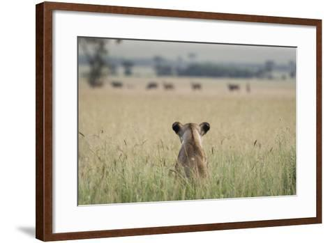 African Lioness (Panthera Leo) Sitting Patiently in the Long Grass-Cheryl-Samantha Owen-Framed Art Print