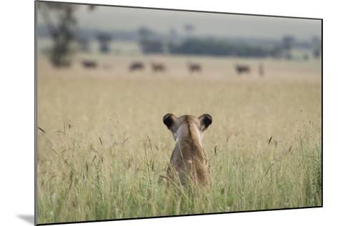 African Lioness (Panthera Leo) Sitting Patiently in the Long Grass-Cheryl-Samantha Owen-Mounted Photographic Print