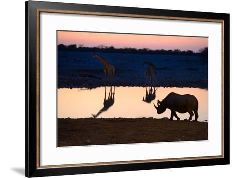 Angolan Giraffes (Giraffa Camelopardalis Angolensis) and Black Rhinoceros (Diceros Bicornis)-Eric Baccega-Framed Art Print