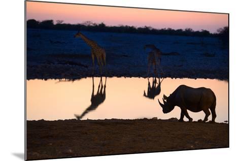 Angolan Giraffes (Giraffa Camelopardalis Angolensis) and Black Rhinoceros (Diceros Bicornis)-Eric Baccega-Mounted Photographic Print