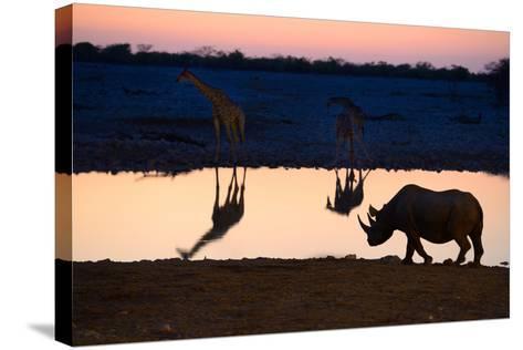 Angolan Giraffes (Giraffa Camelopardalis Angolensis) and Black Rhinoceros (Diceros Bicornis)-Eric Baccega-Stretched Canvas Print