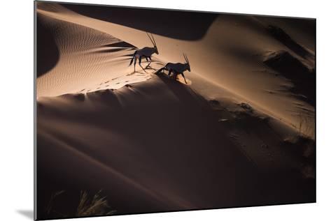 Gemsbok (Oryx Gazella) Two Walking across Sand Dunes, Aerial View. Namibia-Wim van den Heever-Mounted Photographic Print