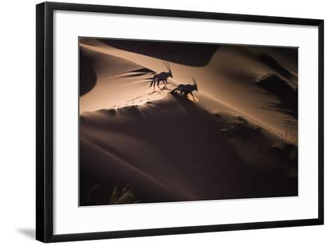 Gemsbok (Oryx Gazella) Two Walking across Sand Dunes, Aerial View. Namibia-Wim van den Heever-Framed Art Print