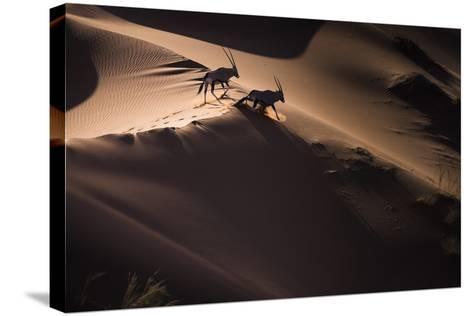 Gemsbok (Oryx Gazella) Two Walking across Sand Dunes, Aerial View. Namibia-Wim van den Heever-Stretched Canvas Print