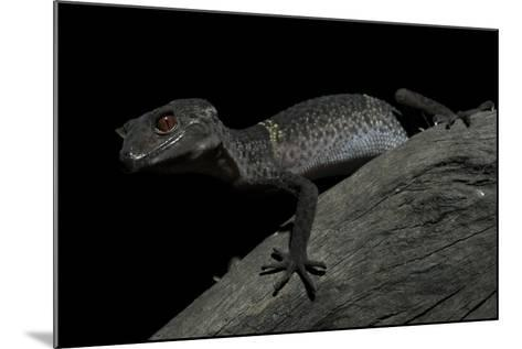Pingxiang Cave Gecko (Goniurosaurus Luii) Clinging to Tree Trunk with Strong Red Eyes-Shibai Xiao-Mounted Photographic Print