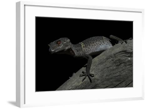Pingxiang Cave Gecko (Goniurosaurus Luii) Clinging to Tree Trunk with Strong Red Eyes-Shibai Xiao-Framed Art Print