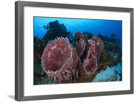 Giant Barrel Sponge (Xestospongia Muta) Cozumel Reefs National Park-Claudio Contreras-Framed Art Print