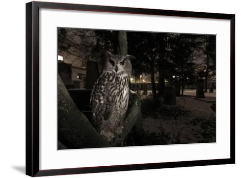 Portrait of Eagle Owl (Bubo Bubo) in Tree at Dusk. Freiburg Im Breisgau, Germany, January-Klaus Echle-Framed Art Print