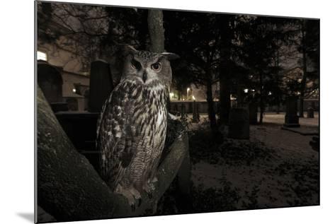 Portrait of Eagle Owl (Bubo Bubo) in Tree at Dusk. Freiburg Im Breisgau, Germany, January-Klaus Echle-Mounted Photographic Print