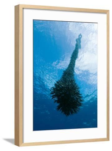 Gooseneck Barnacles-Magnus Lundgren-Framed Art Print